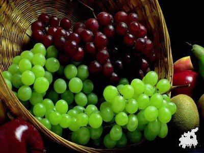 Виноградарство у адыгов(черкесов)