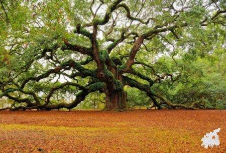Адыгские названия деревьев (Примечание к Хатисову, отдел II «По лесохозяйственной части»)