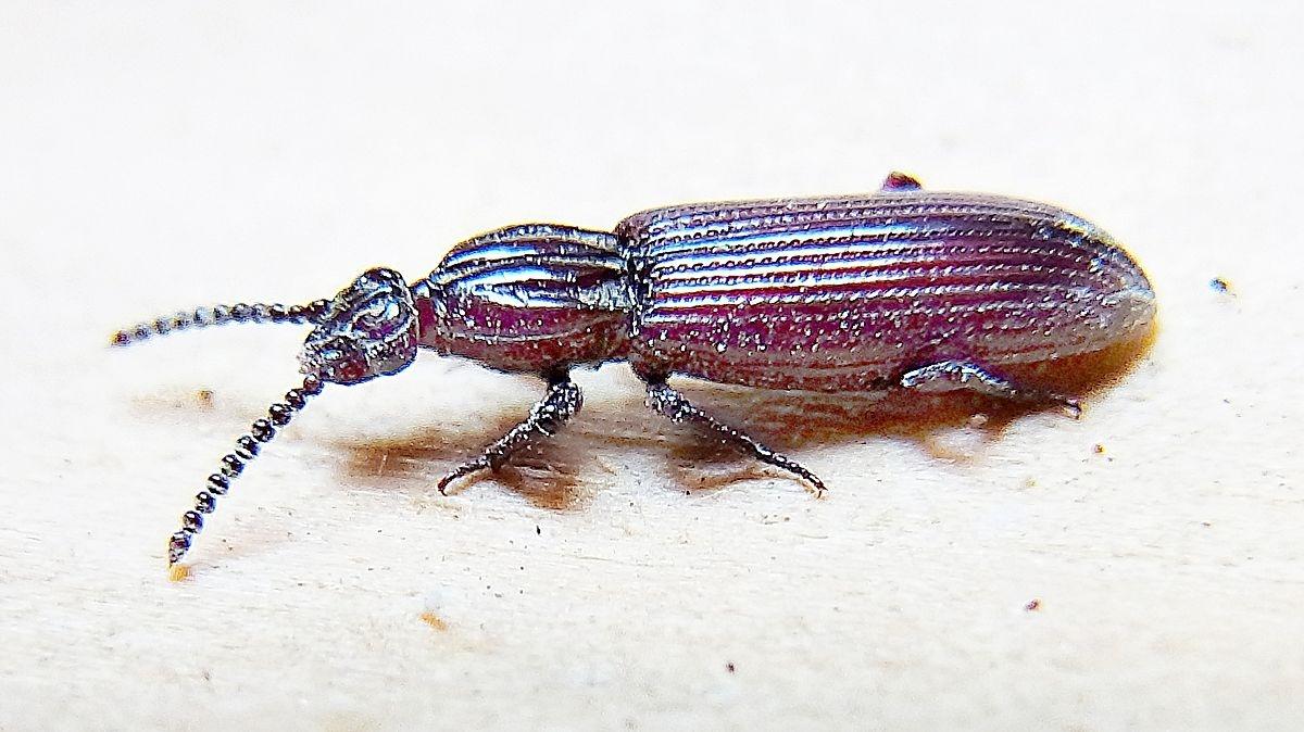В Адыгее обнаружили редкого жука