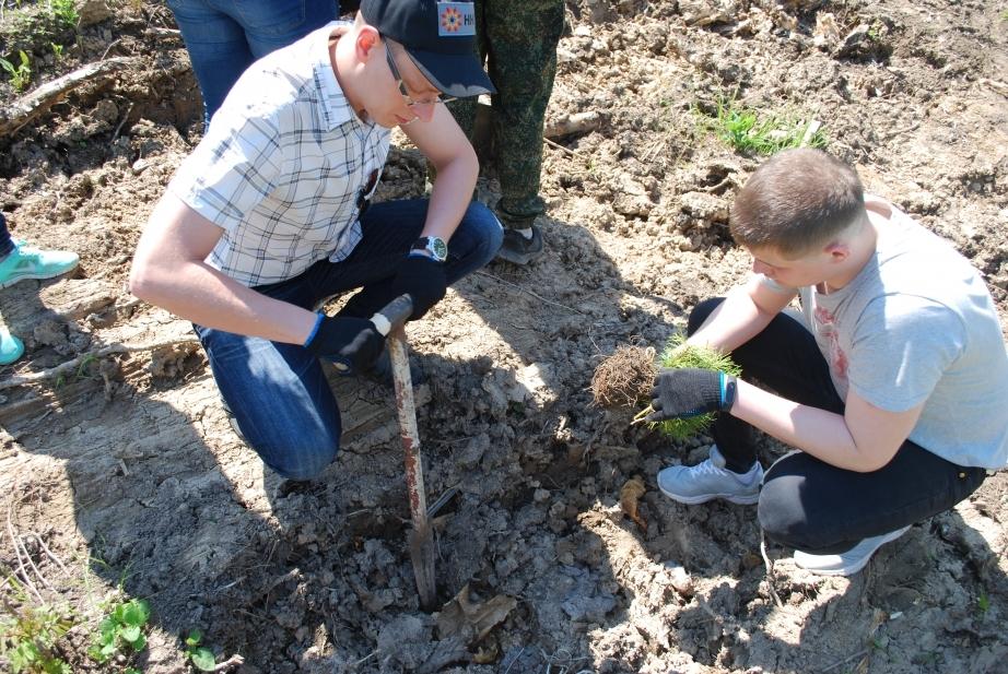 В лесах Адыгеи высадят более 33 тыс. саженцев черного ореха