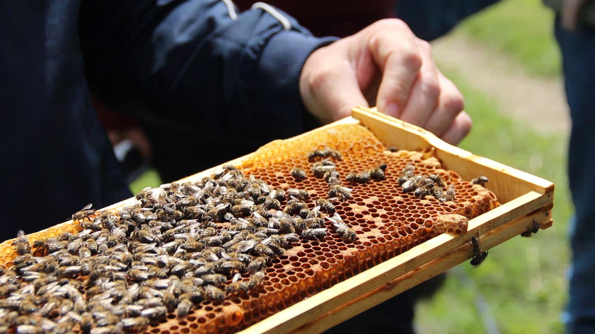 В Адыгее создано отделение Национального союза пчеловодов