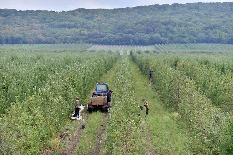 В Адыгее расширили возможность получения грантов для аграриев