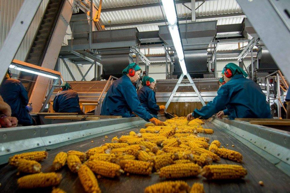 В Адыгее инвестор планирует построить семенной завод