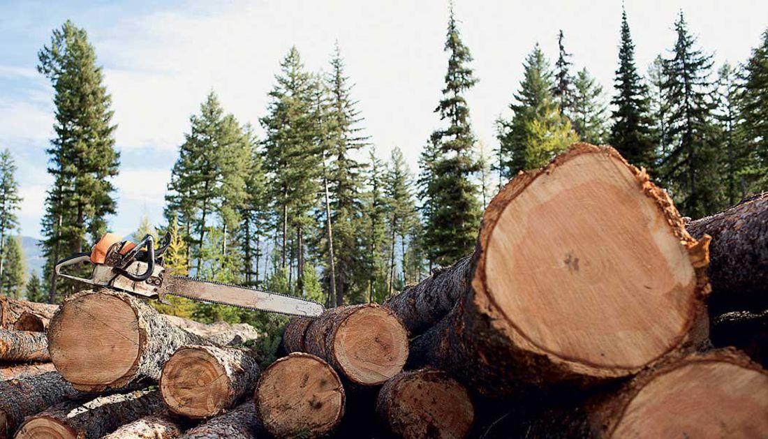 В Адыгее возбуждено уголовное дело по факту незаконной рубки леса на сумму свыше 21 млн. рублей