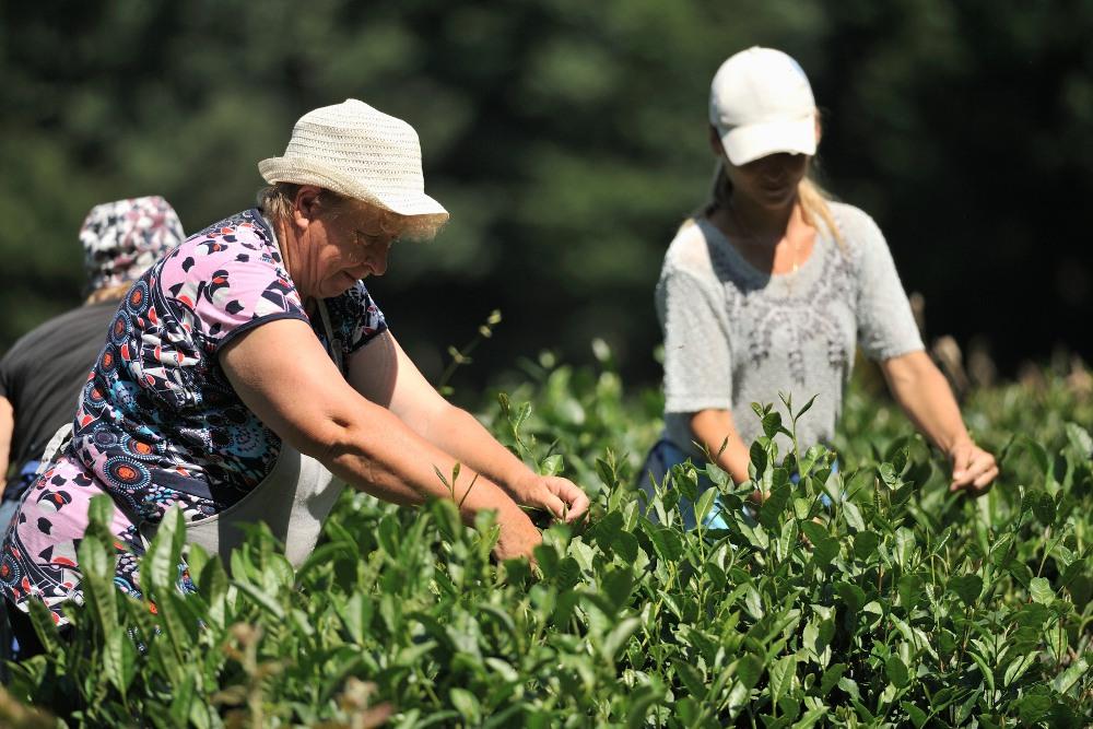 Адыгейский чай получил патент на название