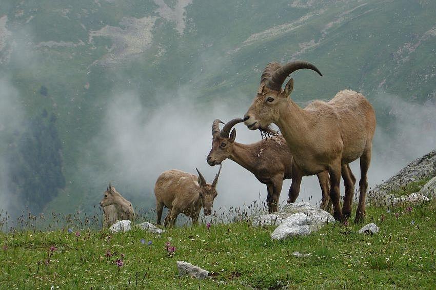 Дубень А. В. Животный мир Западного Кавказа. Млекопитающие (2008)