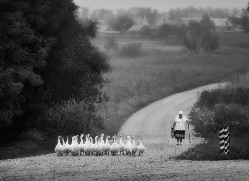 Шесть наград завоевали фотографы из Адыгеи на международном конкурсе Grand Eurasia