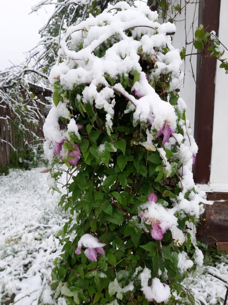 В селе Хамышки Адыгеи в ночь на 23 мая выпал снег